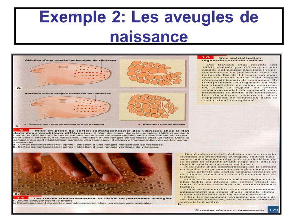 Exemple 2: Les aveugles de naissance
