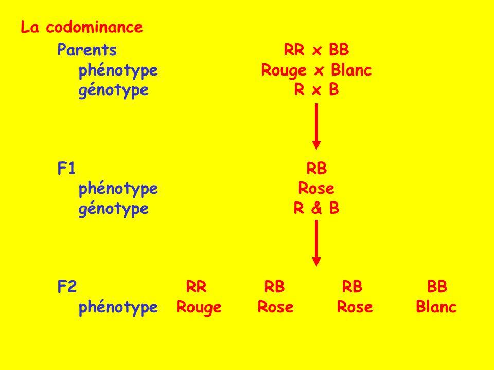 La codominance Parents. phénotype. génotype. F1. F2. RR x BB. Rouge x Blanc. R x B. RB. Rose.