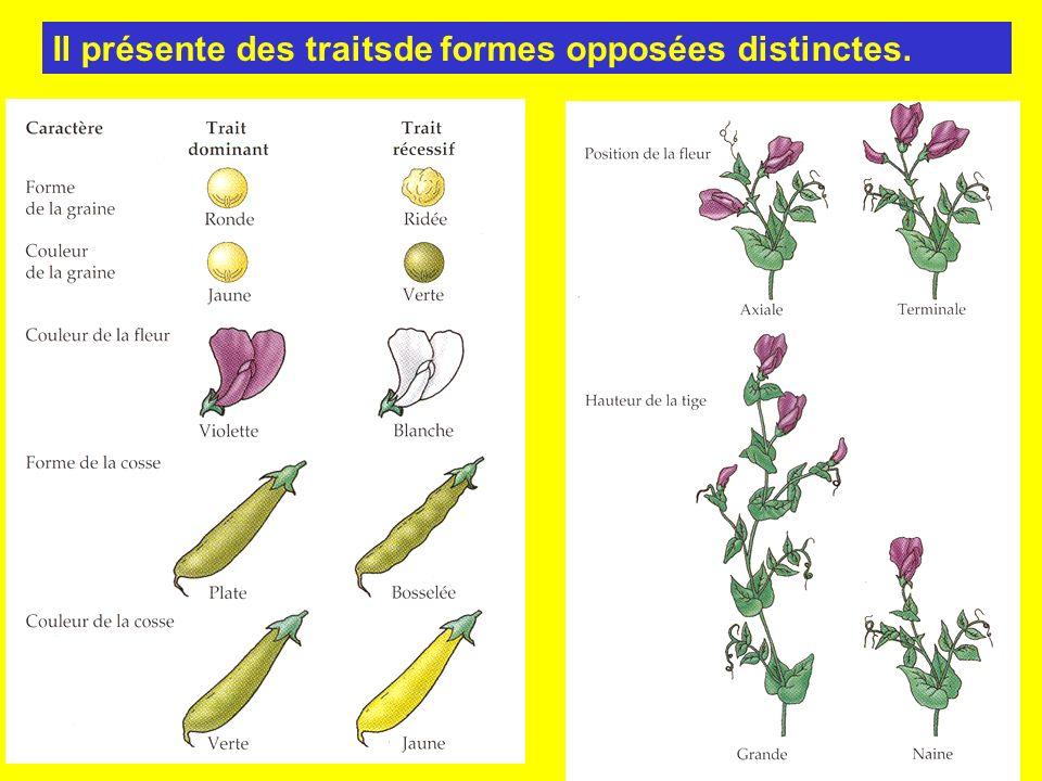 Il présente des traitsde formes opposées distinctes.