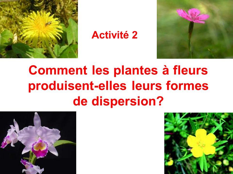 Activité 2 Comment les plantes à fleurs produisent-elles leurs formes de dispersion
