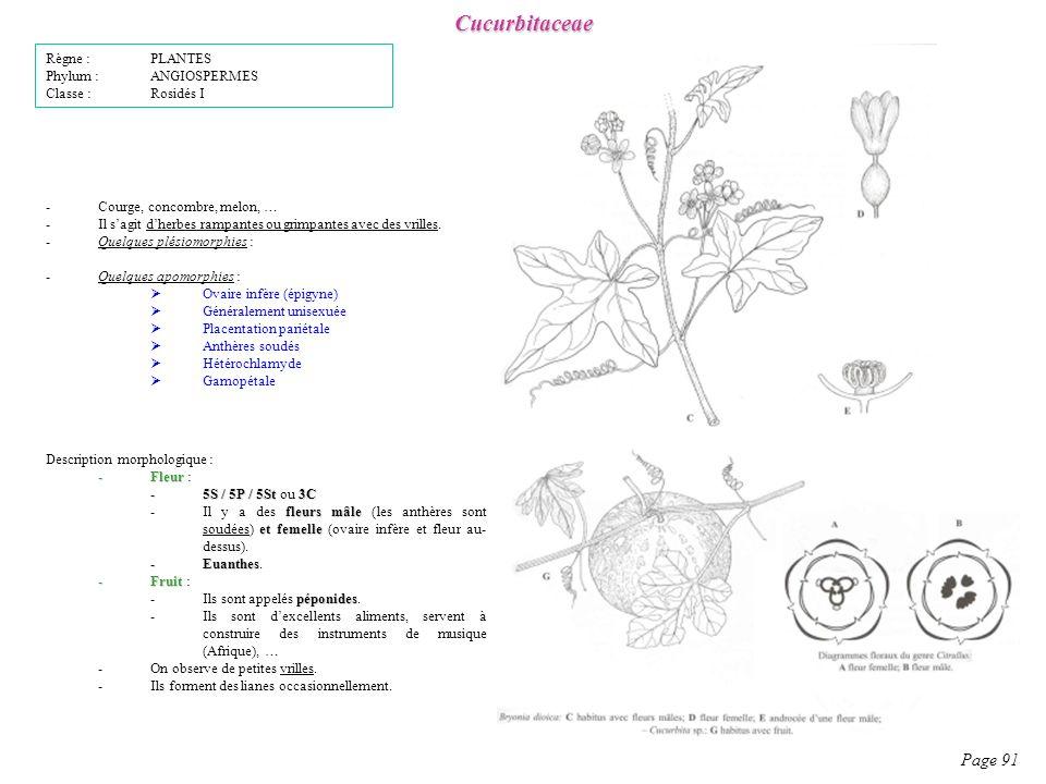Cucurbitaceae Page 91 Règne : PLANTES Phylum : ANGIOSPERMES