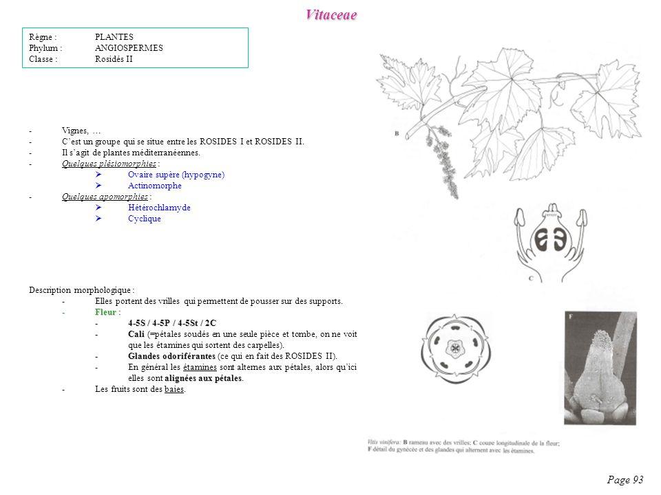 Vitaceae Page 93 Règne : PLANTES Phylum : ANGIOSPERMES