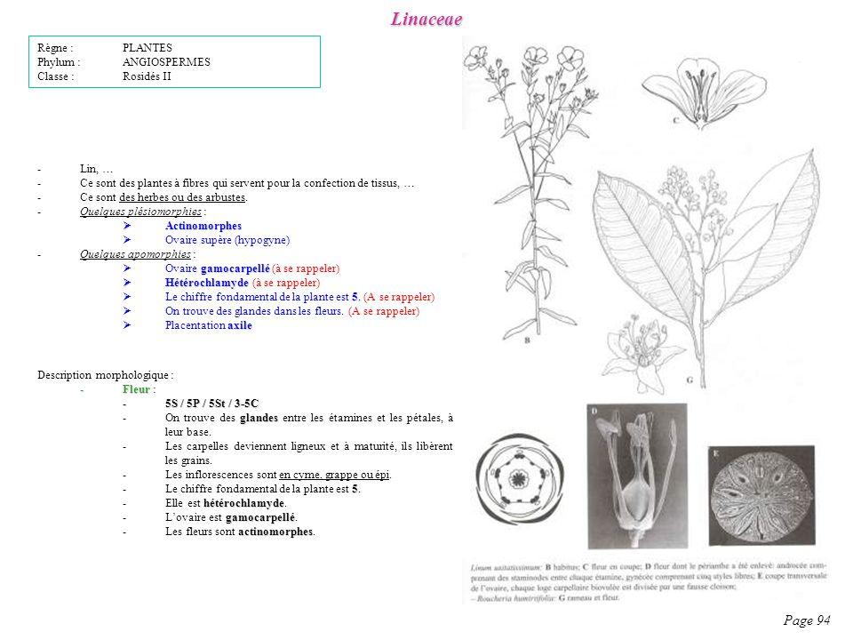 Linaceae Page 94 Règne : PLANTES Phylum : ANGIOSPERMES