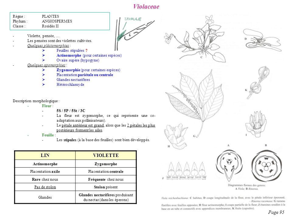 Violaceae LIN VIOLETTE Page 95 Règne : PLANTES Phylum : ANGIOSPERMES