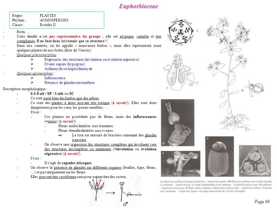 Euphorbiaceae Page 96 Règne : PLANTES Phylum : ANGIOSPERMES
