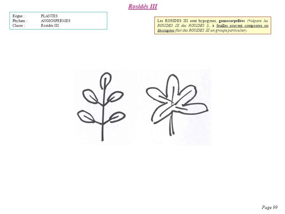 Rosidés III Page 99 Règne : PLANTES Phylum : ANGIOSPERMES
