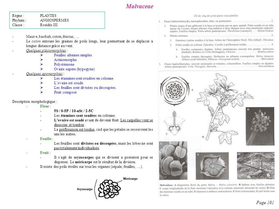 Malvaceae Page 101 Règne : PLANTES Phylum : ANGIOSPERMES