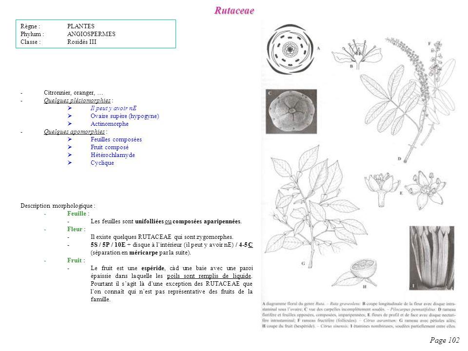 Rutaceae Page 102 Règne : PLANTES Phylum : ANGIOSPERMES