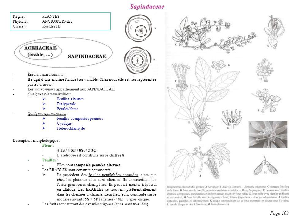 Sapindaceae Page 103 Règne : PLANTES Phylum : ANGIOSPERMES