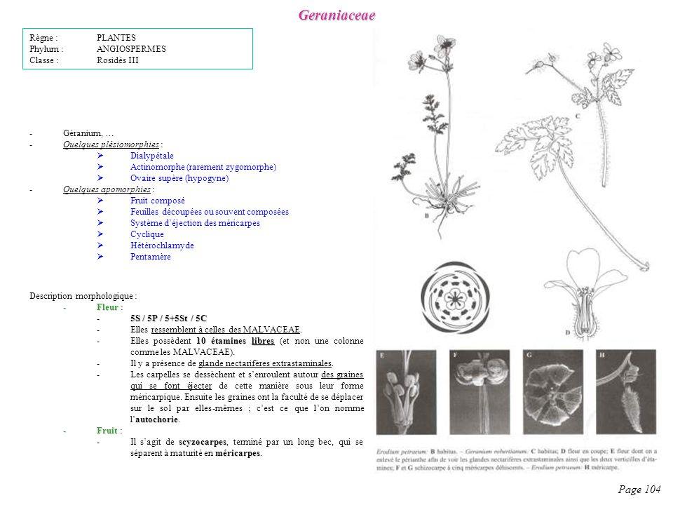 Geraniaceae Page 104 Règne : PLANTES Phylum : ANGIOSPERMES