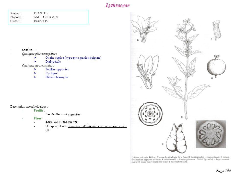 Lythraceae Page 106 Règne : PLANTES Phylum : ANGIOSPERMES