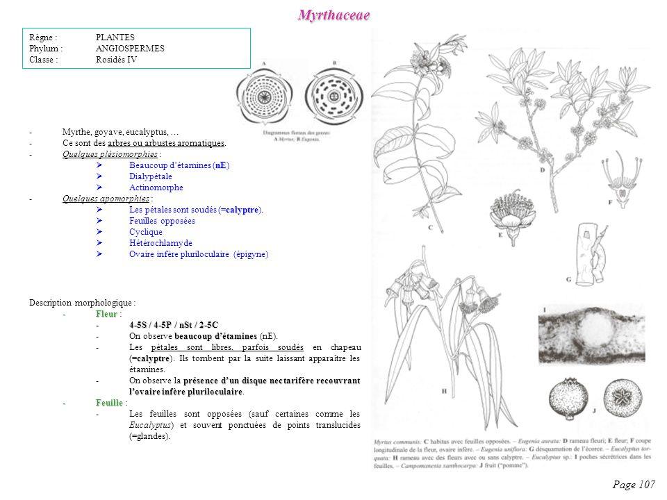 Myrthaceae Page 107 Règne : PLANTES Phylum : ANGIOSPERMES
