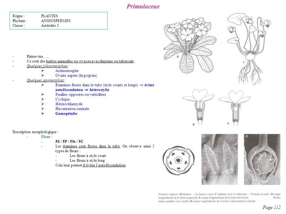 Primulaceae Page 112 Règne : PLANTES Phylum : ANGIOSPERMES
