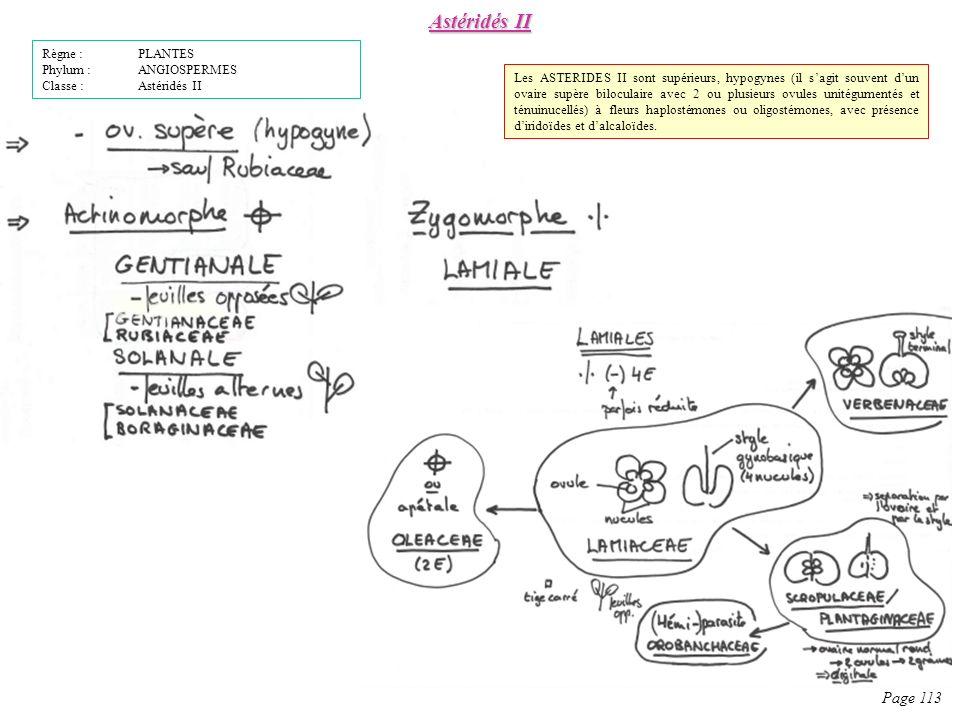 Astéridés II Page 113 Règne : PLANTES Phylum : ANGIOSPERMES
