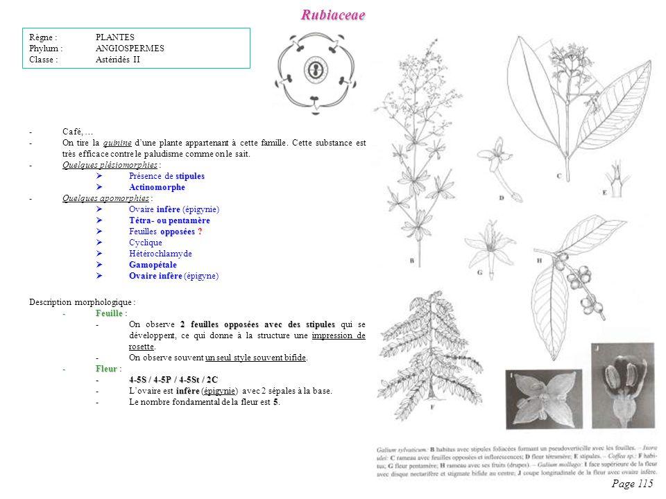 Rubiaceae Page 115 Règne : PLANTES Phylum : ANGIOSPERMES
