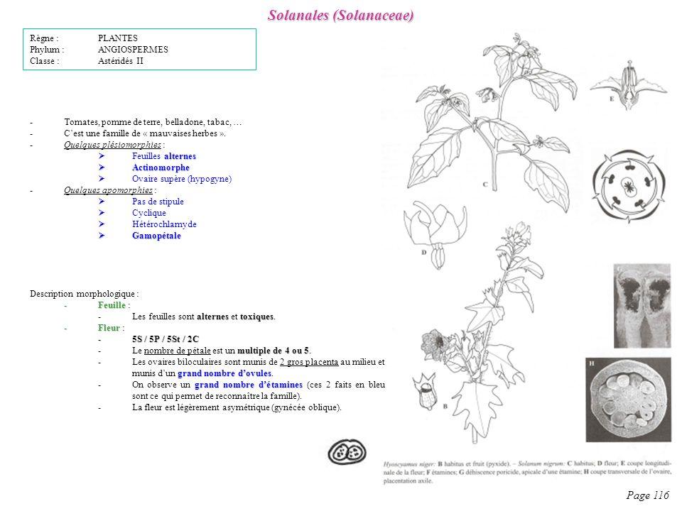Solanales (Solanaceae)