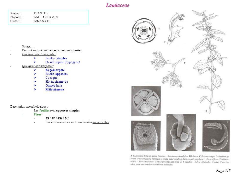 Lamiaceae Page 118 Règne : PLANTES Phylum : ANGIOSPERMES