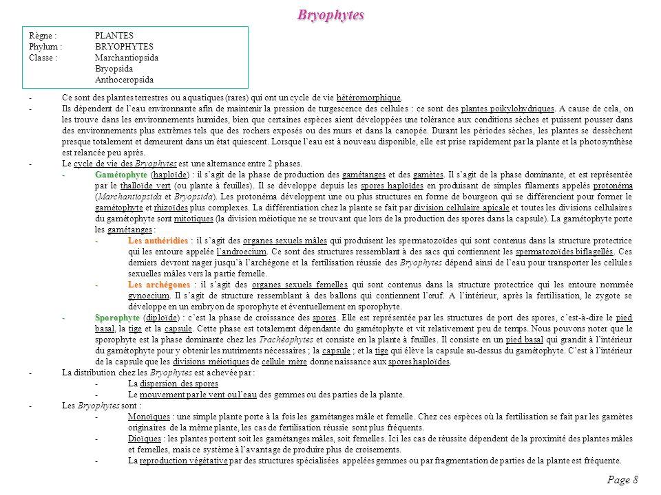 Bryophytes Page 8 Règne : PLANTES Phylum : BRYOPHYTES