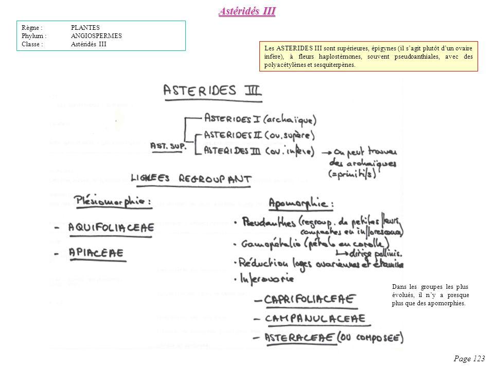 Astéridés III Page 123 Règne : PLANTES Phylum : ANGIOSPERMES