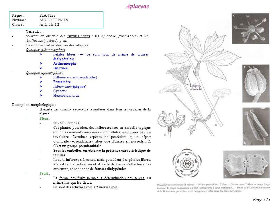 Apiaceae Page 125 Règne : PLANTES Phylum : ANGIOSPERMES