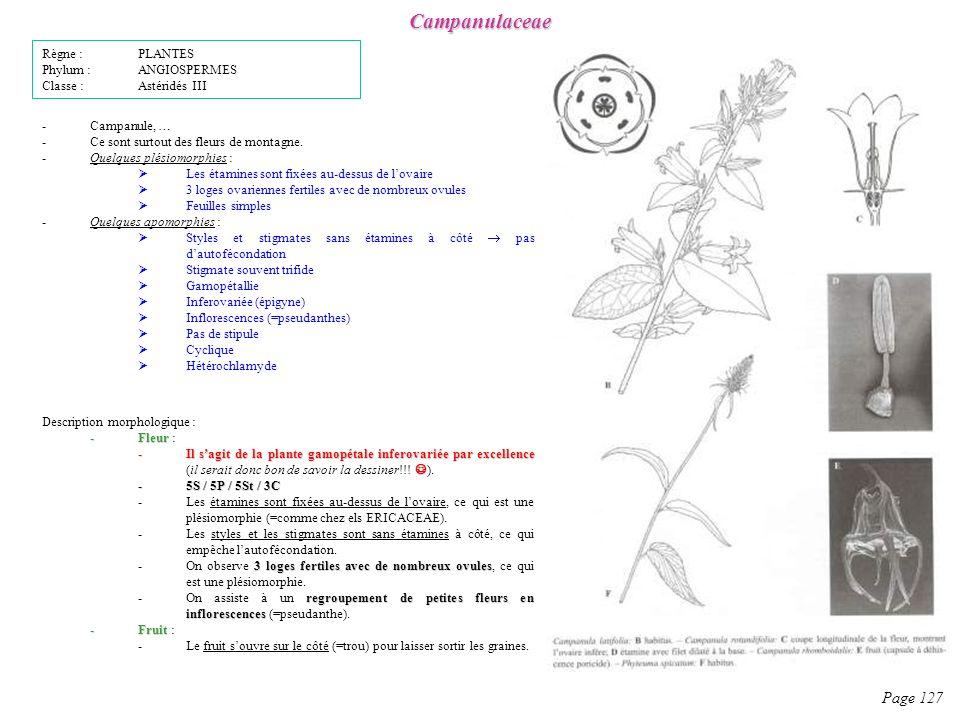 Campanulaceae Page 127 Règne : PLANTES Phylum : ANGIOSPERMES