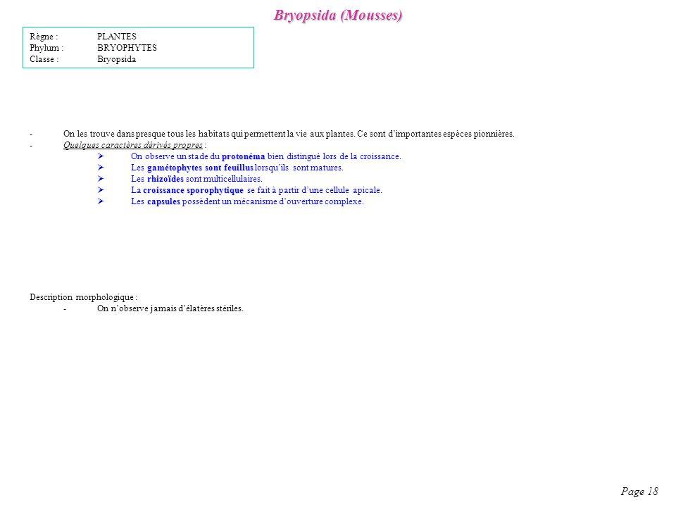 Bryopsida (Mousses) Page 18 Règne : PLANTES Phylum : BRYOPHYTES