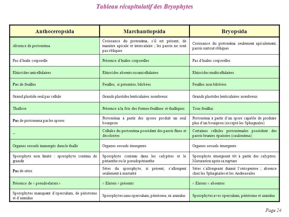 Tableau récapitulatif des Bryophytes