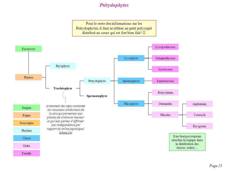 Ptérydophytes