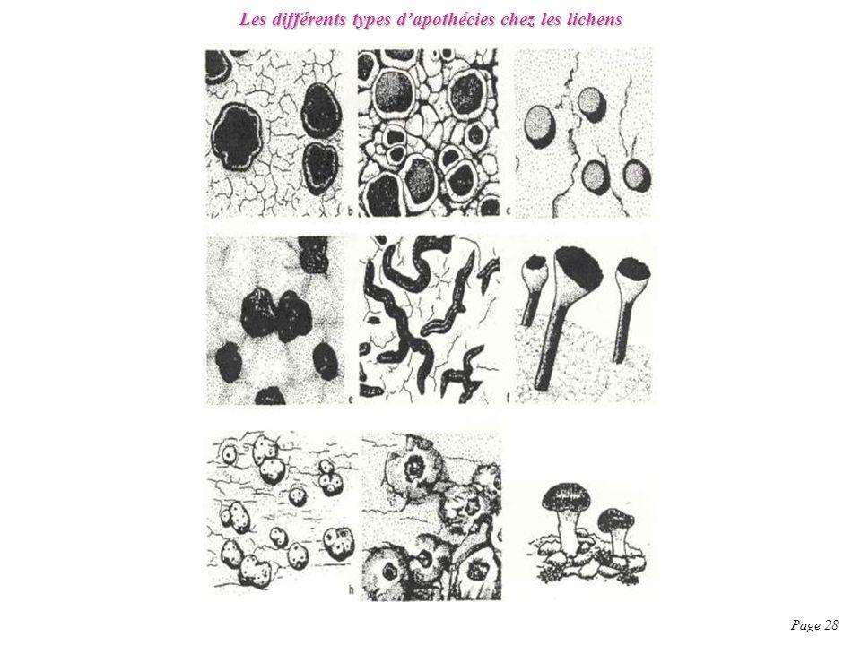 Les différents types d'apothécies chez les lichens