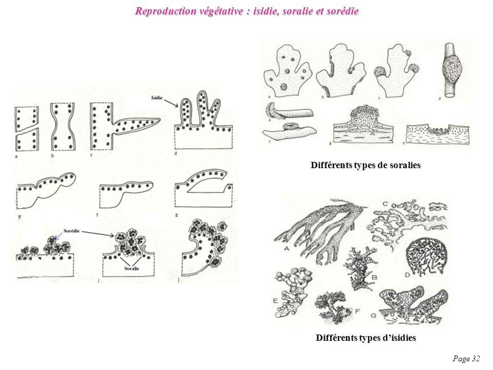 Reproduction végétative : isidie, soralie et sorédie