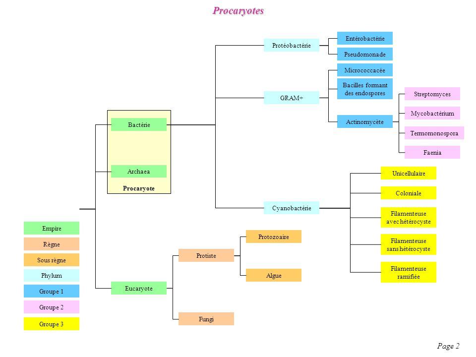 Procaryotes Page 2 Entérobactérie Protéobactérie Pseudomonade
