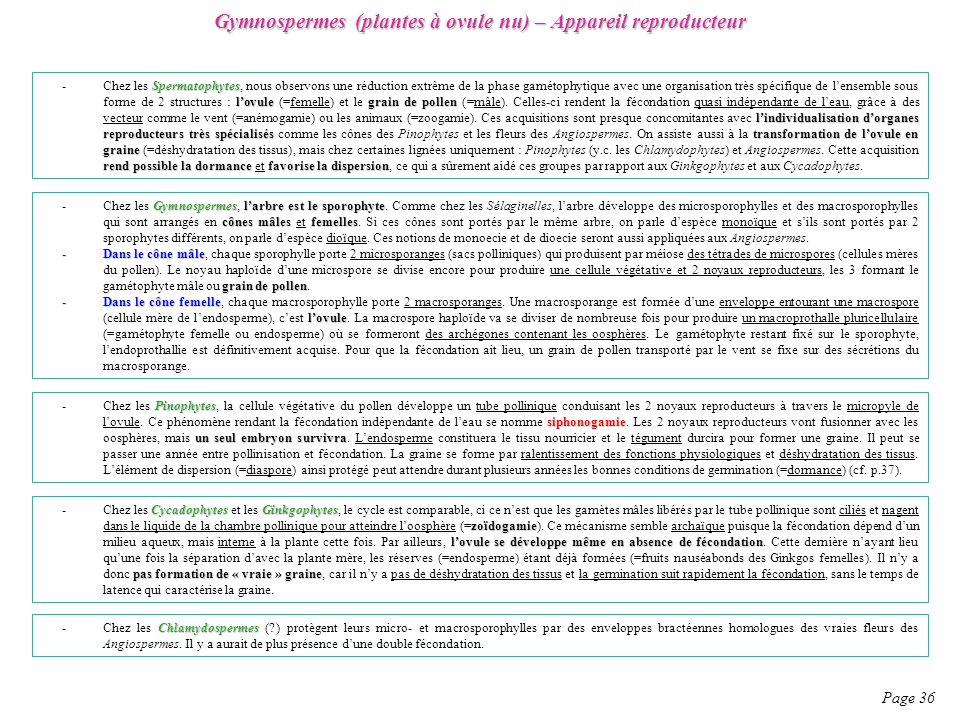 Gymnospermes (plantes à ovule nu) – Appareil reproducteur