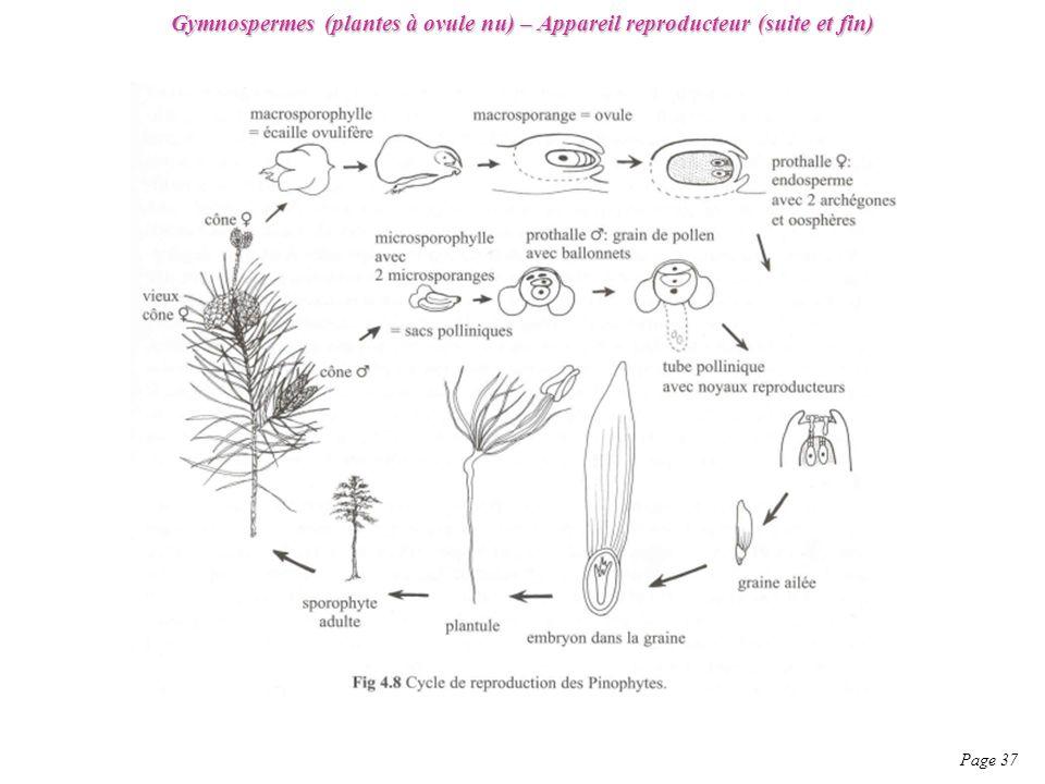 Gymnospermes (plantes à ovule nu) – Appareil reproducteur (suite et fin)