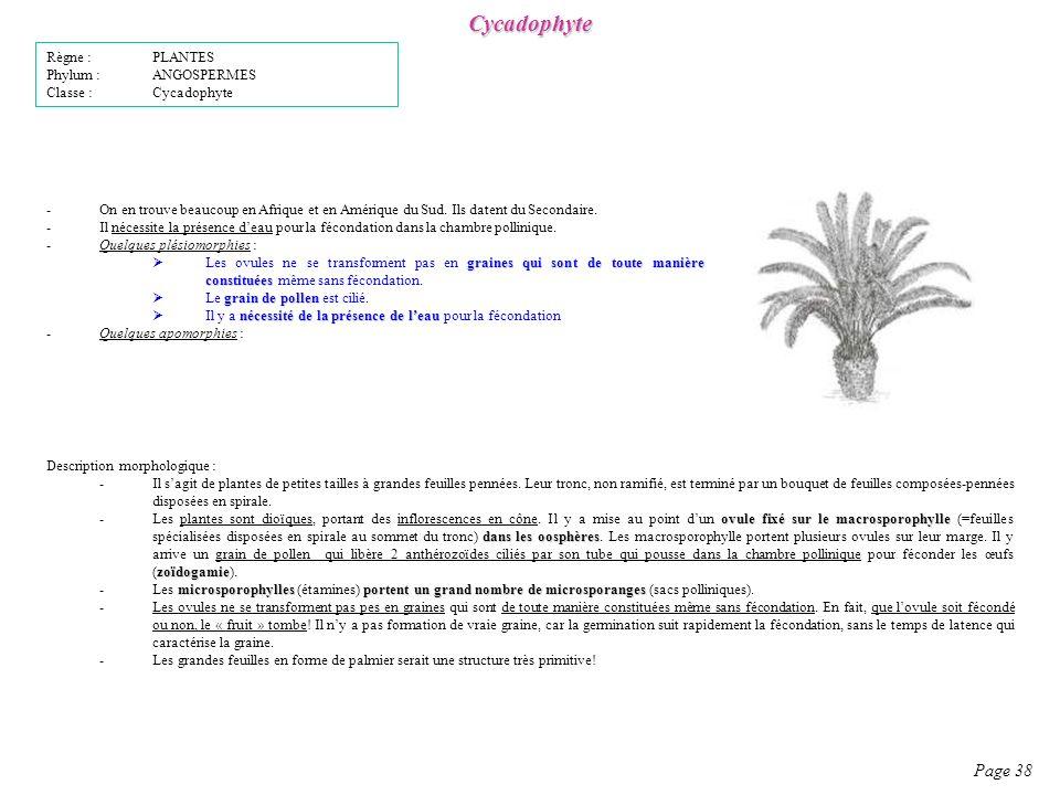 Cycadophyte Page 38 Règne : PLANTES Phylum : ANGOSPERMES