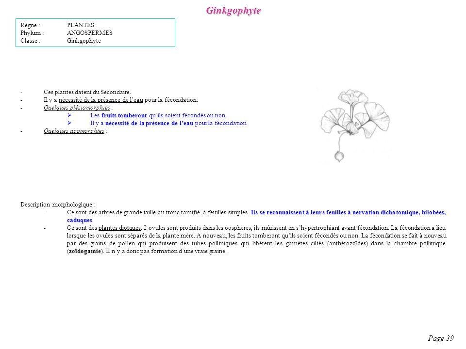 Ginkgophyte Page 39 Règne : PLANTES Phylum : ANGOSPERMES
