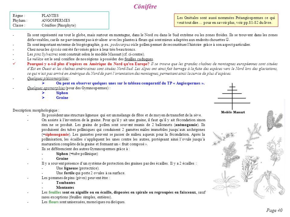 Cônifère Page 40 Règne : PLANTES Phylum : ANGOSPERMES