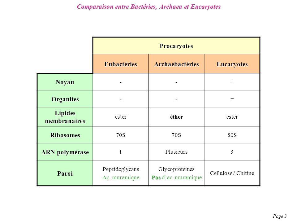 Comparaison entre Bactéries, Archaea et Eucaryotes