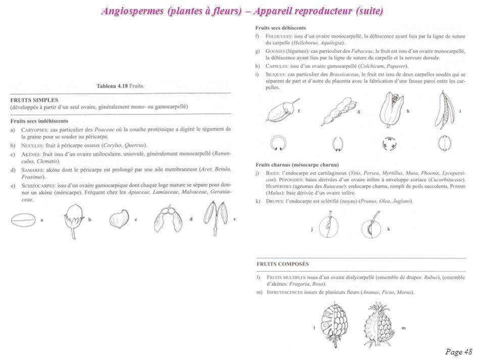 Angiospermes (plantes à fleurs) – Appareil reproducteur (suite)