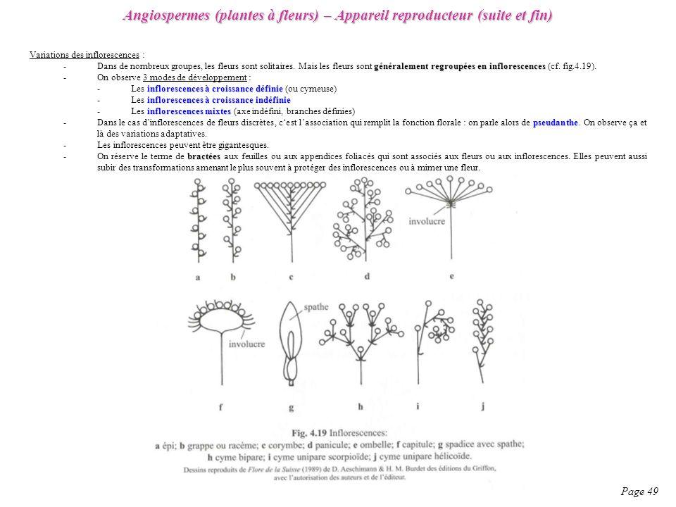 Angiospermes (plantes à fleurs) – Appareil reproducteur (suite et fin)
