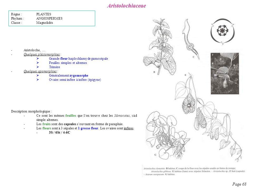 Aristolochiaceae Page 68 Règne : PLANTES Phylum : ANGIOSPERMES