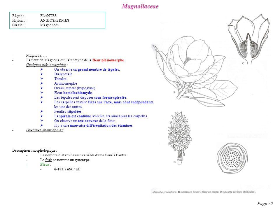 Magnoliaceae Page 70 Règne : PLANTES Phylum : ANGIOSPERMES