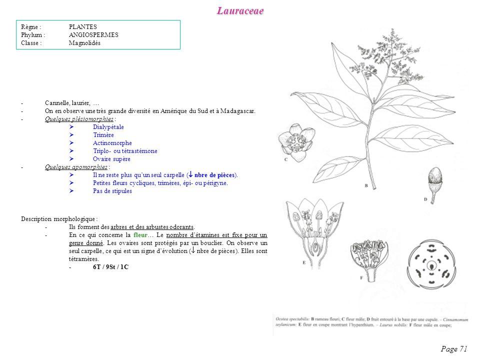 Lauraceae Page 71 Règne : PLANTES Phylum : ANGIOSPERMES