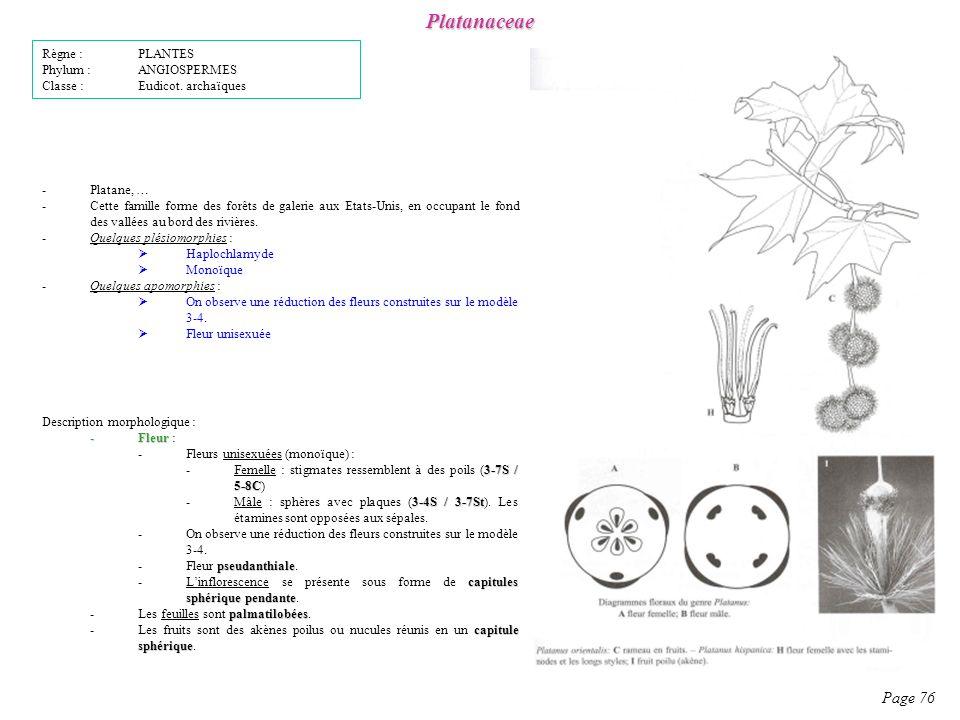 Platanaceae Page 76 Règne : PLANTES Phylum : ANGIOSPERMES