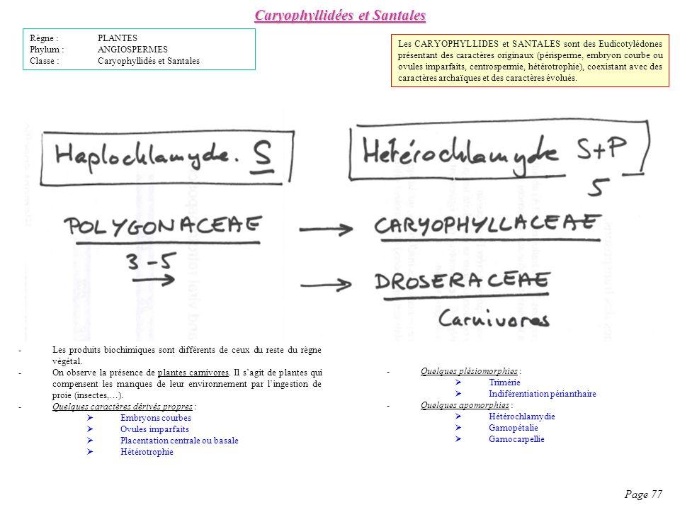 Caryophyllidées et Santales