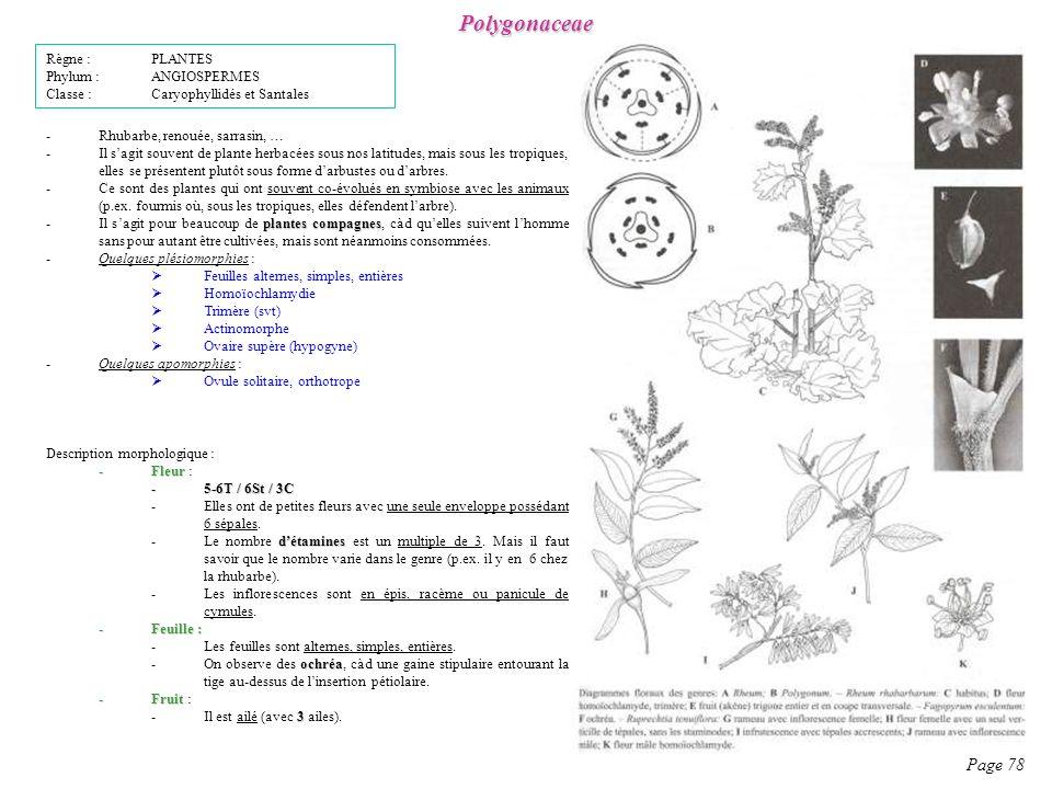 Polygonaceae Page 78 Règne : PLANTES Phylum : ANGIOSPERMES