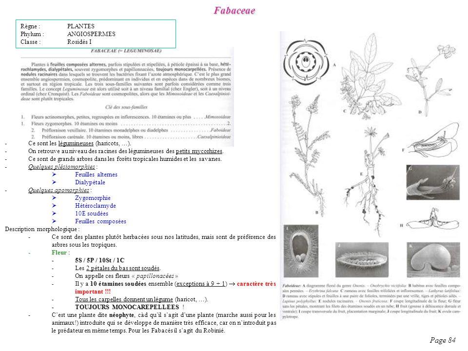 Fabaceae Page 84 Règne : PLANTES Phylum : ANGIOSPERMES