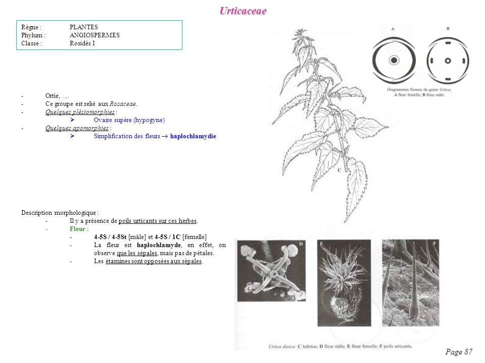 Urticaceae Page 87 Règne : PLANTES Phylum : ANGIOSPERMES