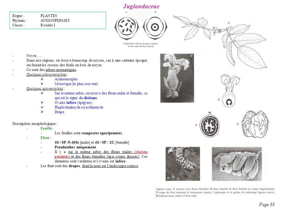 Juglandaceae Page 88 Règne : PLANTES Phylum : ANGIOSPERMES