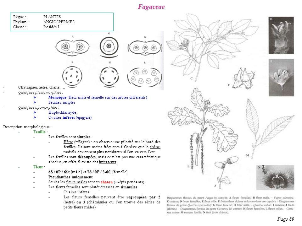 Fagaceae Page 89 Règne : PLANTES Phylum : ANGIOSPERMES