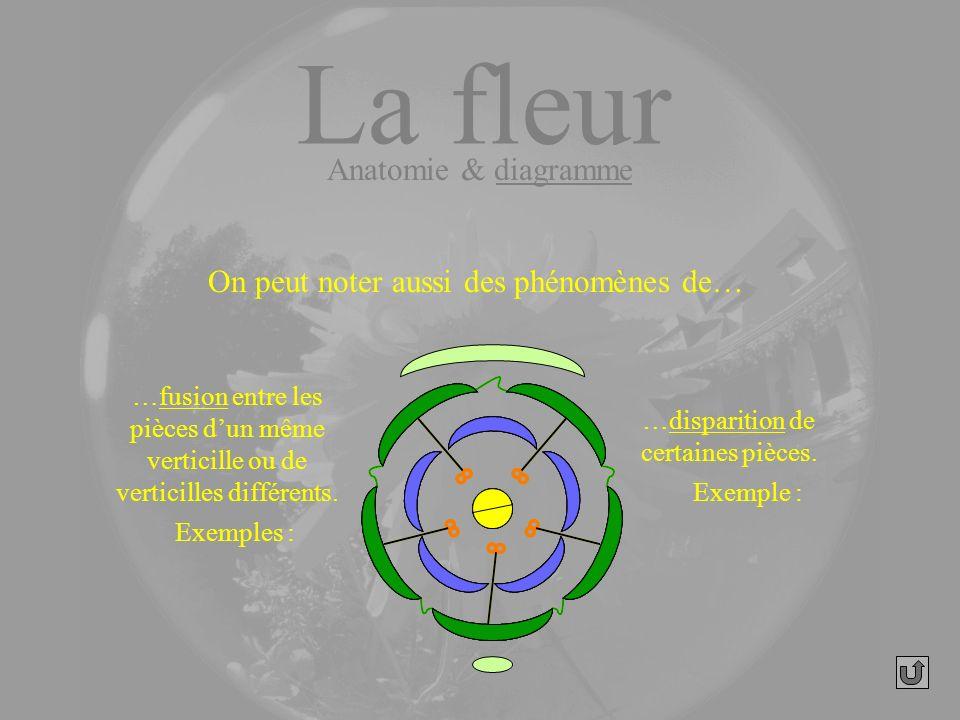 La fleur Anatomie & diagramme On peut noter aussi des phénomènes de…